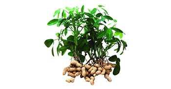 Арахис, кукуруза или овощи: чем засеять поливные земли выгоднее