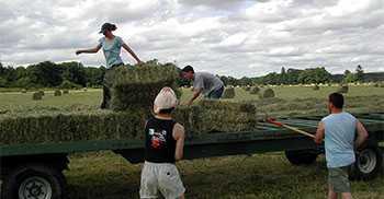 Возможности и льготы для семейных фермерских хозяйств