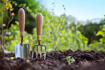 Минеральные удобрения и их роль в сельскохозяйственном производстве